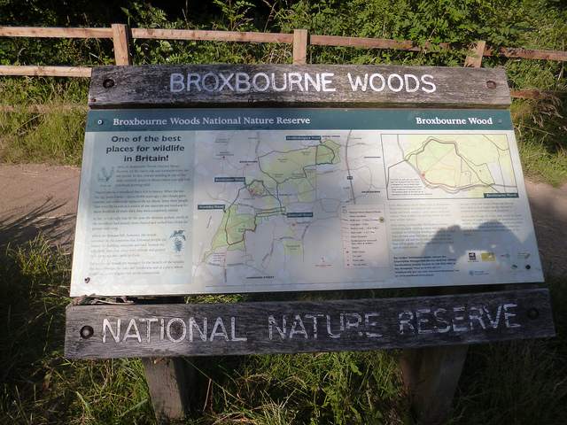 Broxbourne Wood Nature Reserve, Hertfordshire