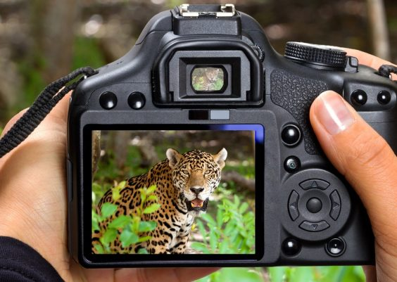 Best Camera for Safari